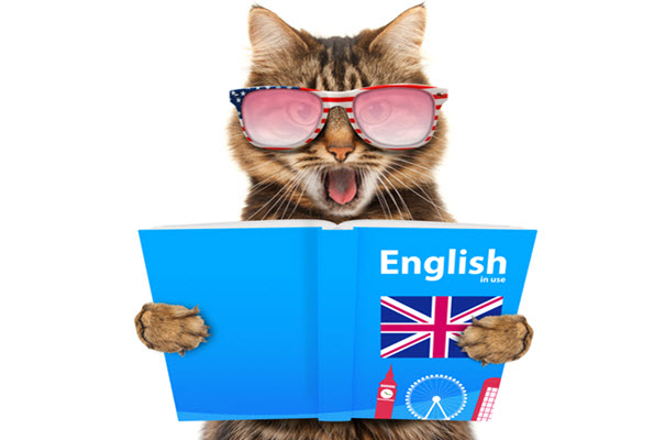Cat Reading English Book