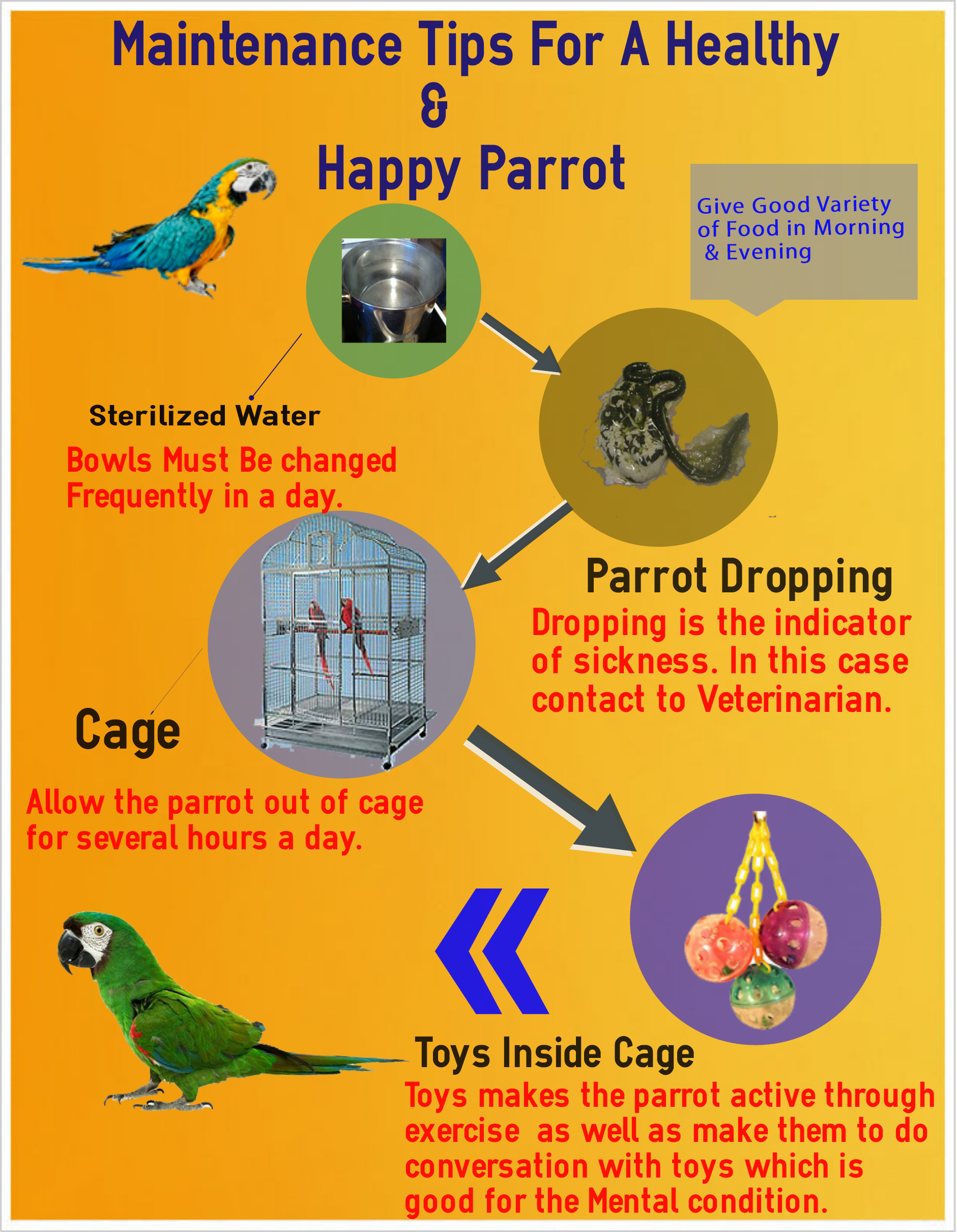 Health Maintenance Of Parrot
