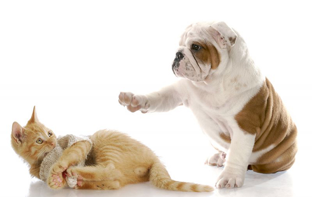 Puppy Playing with Kitten