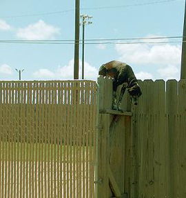 Rons Dog-Jumping-Fence
