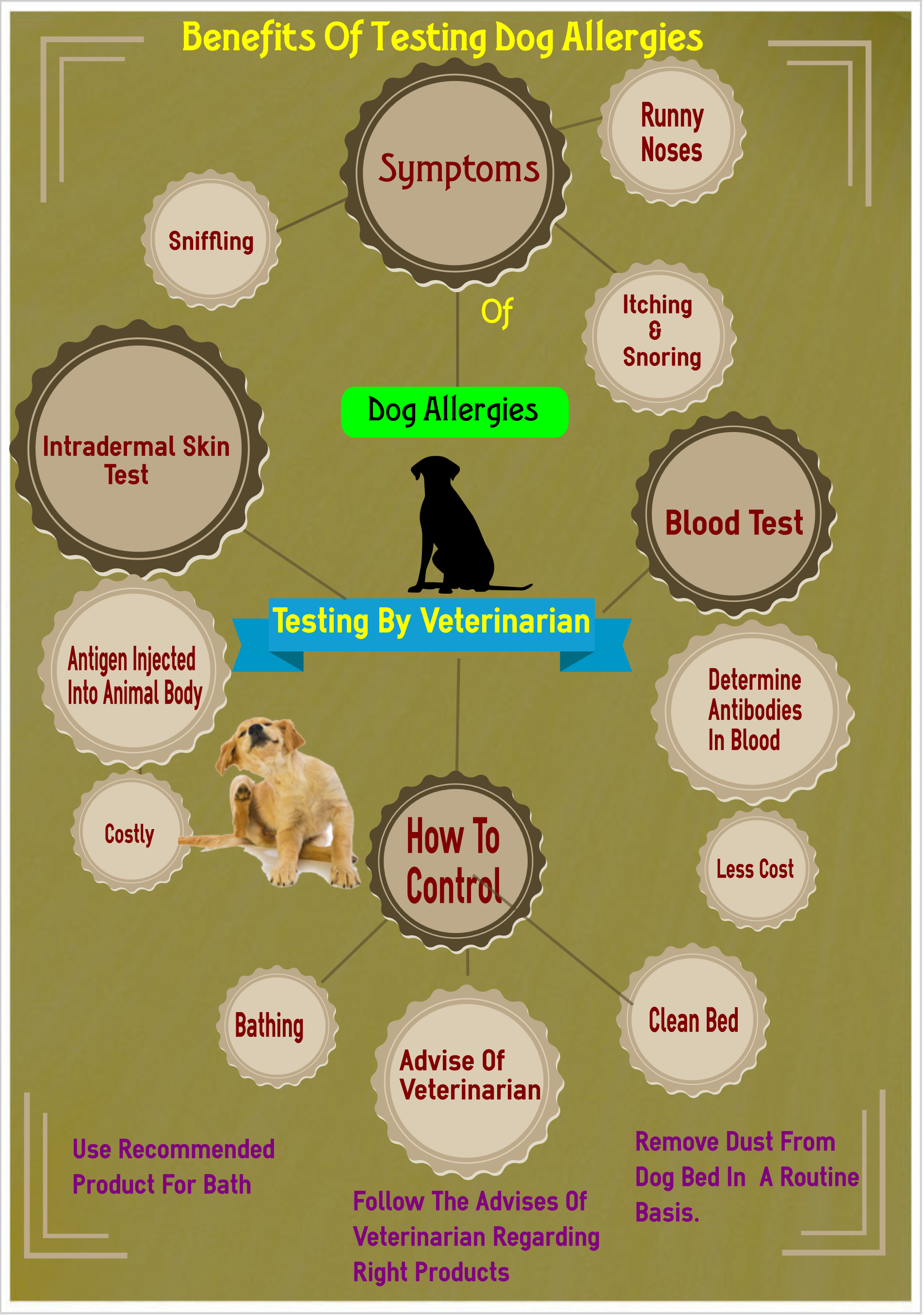 Testing Your Dog For Allergies