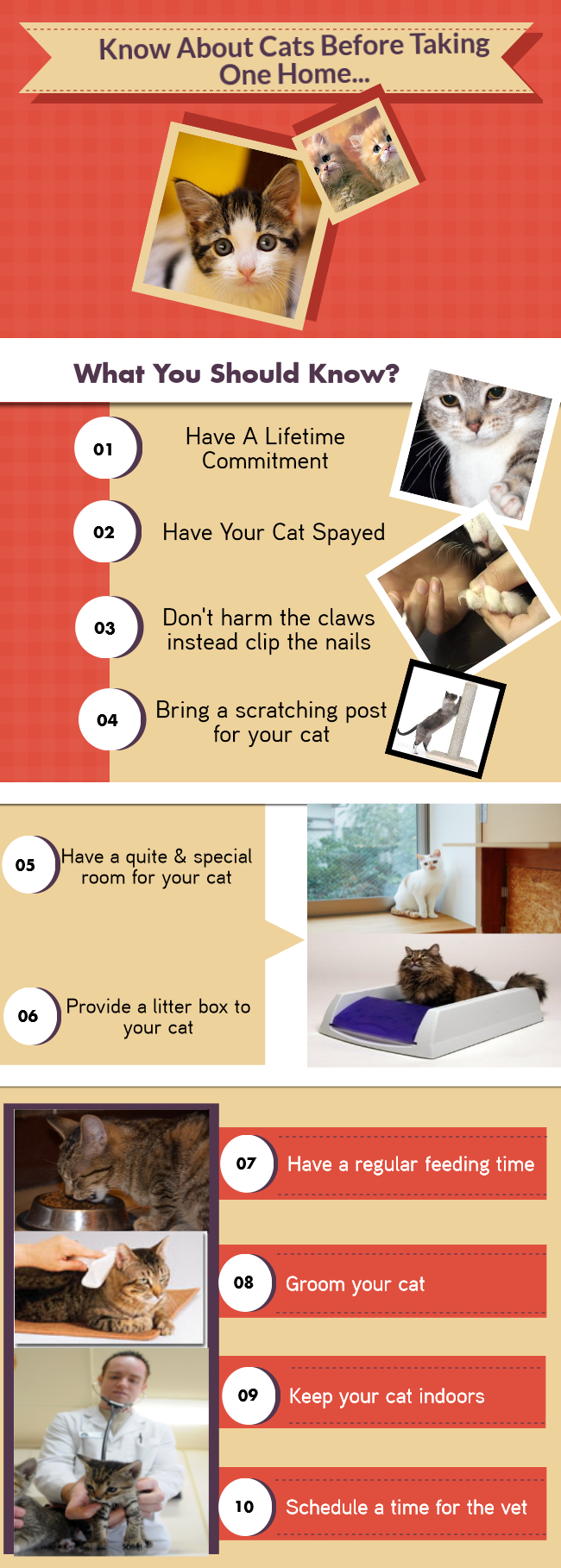 Things To Know About Cats